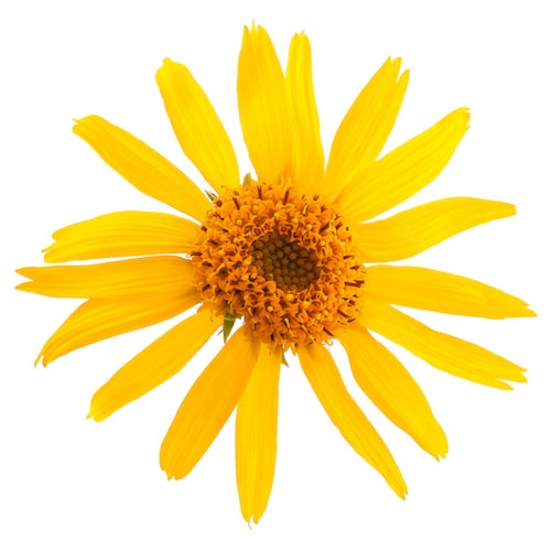 ARNICA EXTRACT (WATER SOLUBLE - PG)