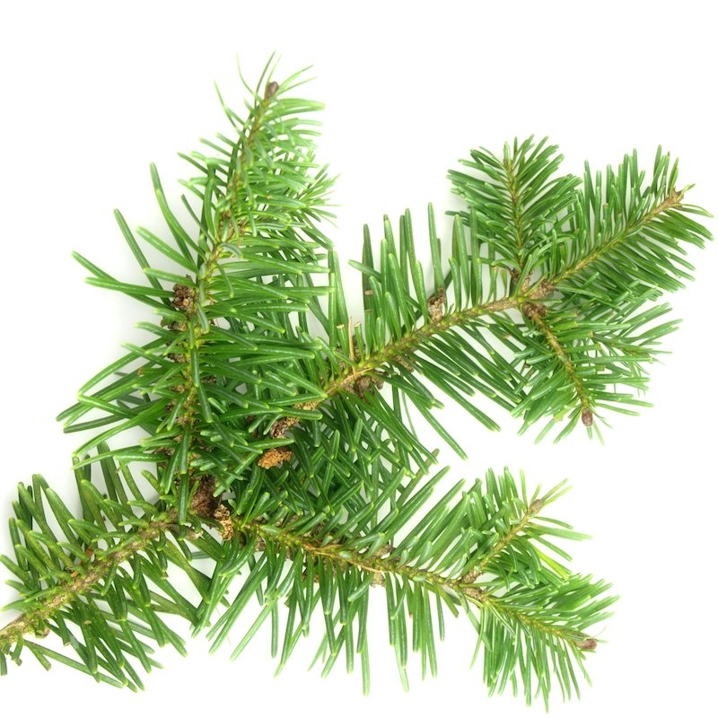 BALSAM FIR ABSOLUTE