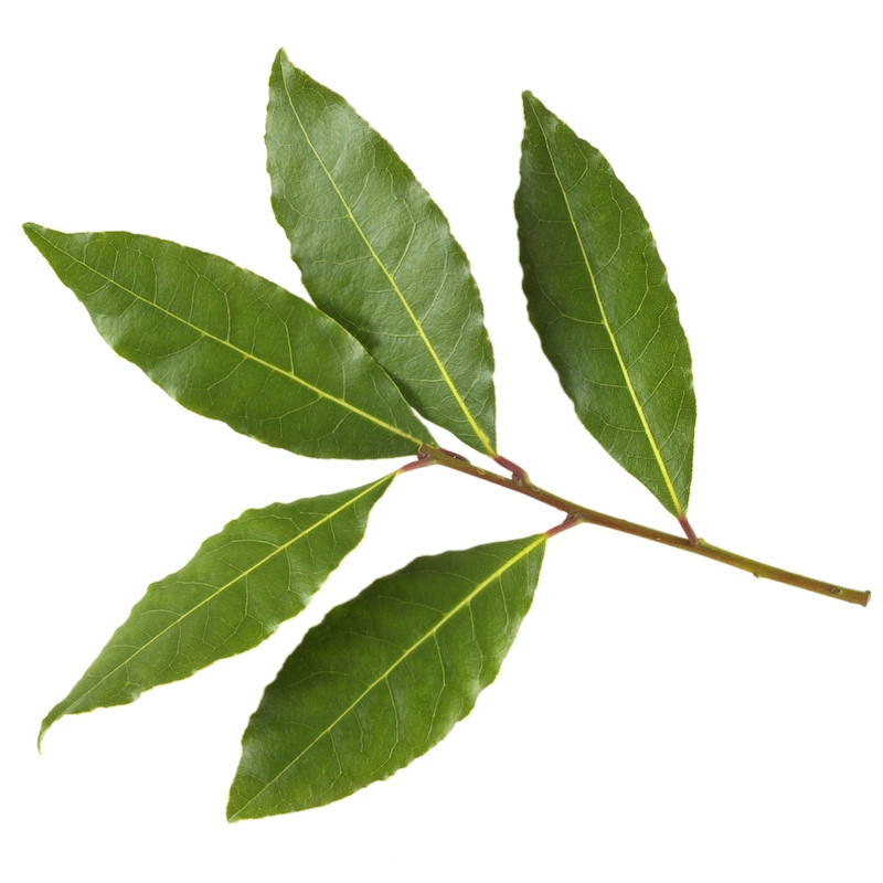 BAY LAUREL (LAUREL LEAF) OIL