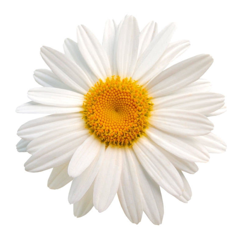 CHAMOMILE EXTRACT  (WATER SOLUBLE - PG)
