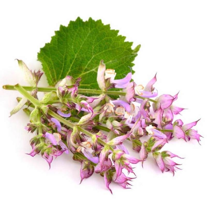CLARY SAGE OIL
