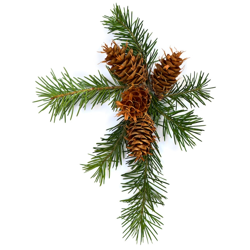 DOUGLAS FIR NEEDLE OIL