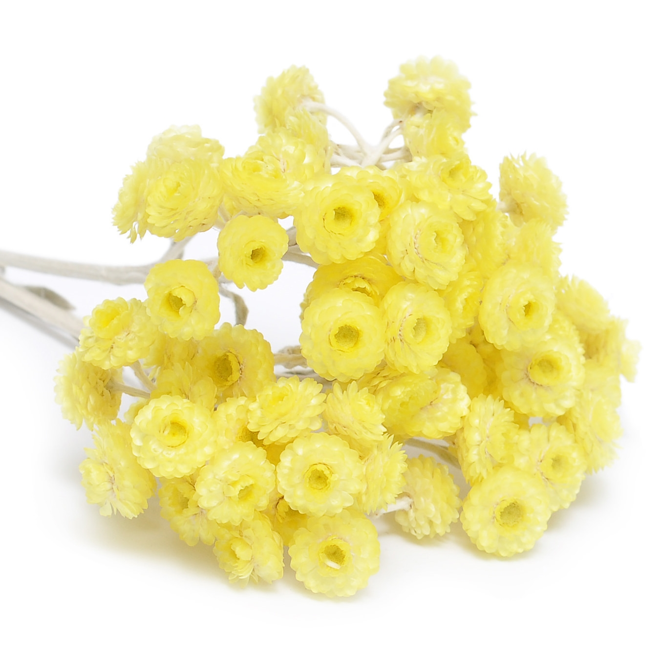 IMMORTELLE (HELICHRYSUM) EXTRACT (OIL SOLUBLE - SNO)