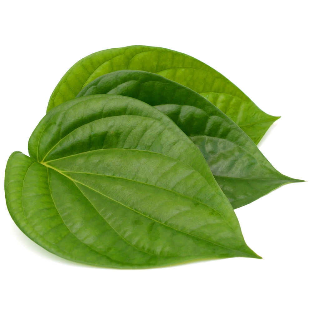 Betel Leaf Essential Oil | Organic Betel Leaf Oil - Nature In Bottle