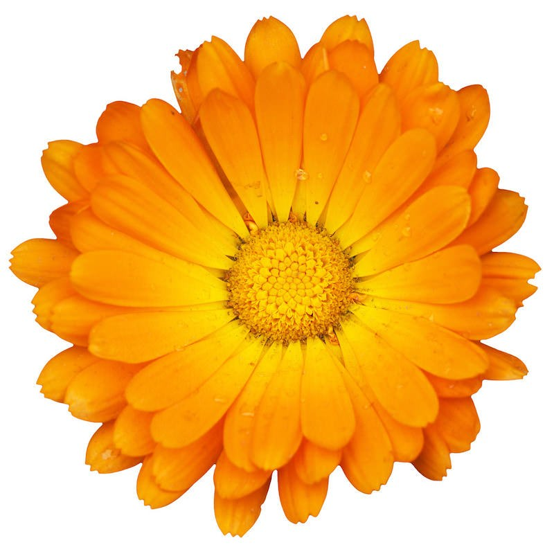 Calendula Hydrosol | Organic Marigold Hydrosol - Nature in Bottle