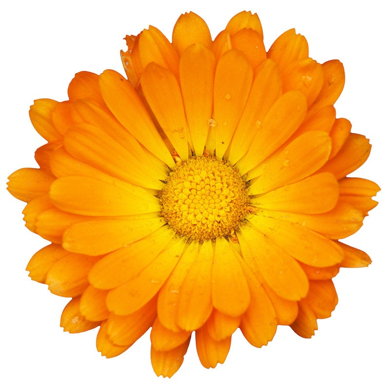 Calendula Oil | Organic Marigold Infused Oil - Nature In Bottle