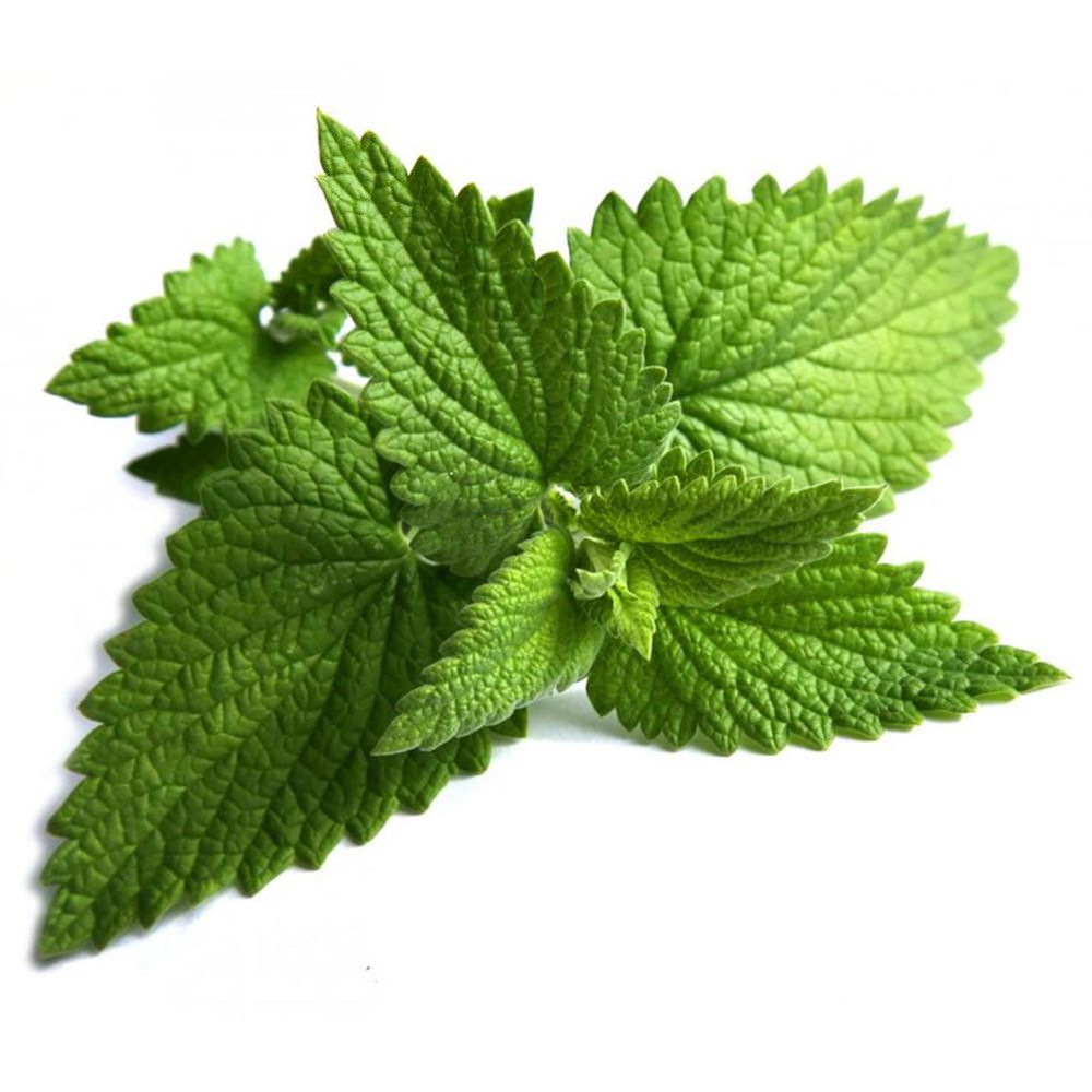Corn Mint Essential Oil | Organic Mentha Arvensis Essential Oil - Nature In Bottle