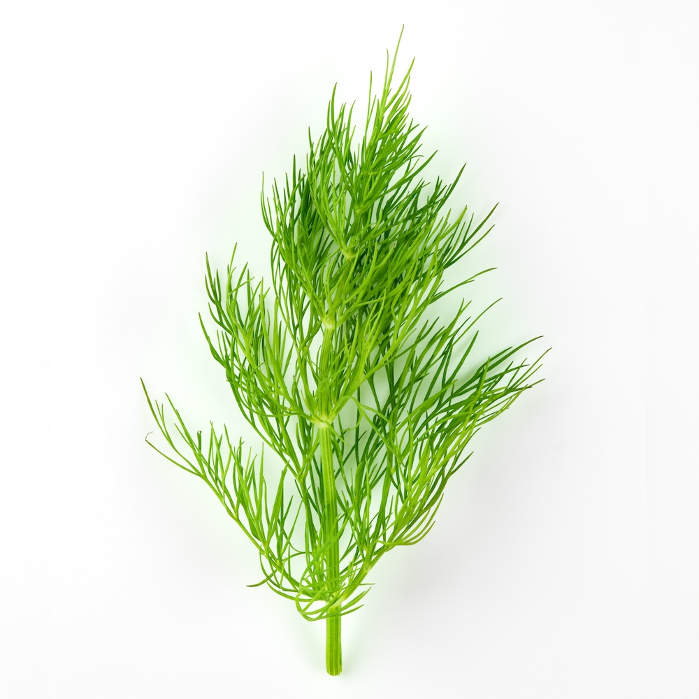 Dill Weed Essential Oil   Anethum Graveolens Herb Essential Oil - Nature In Bottle