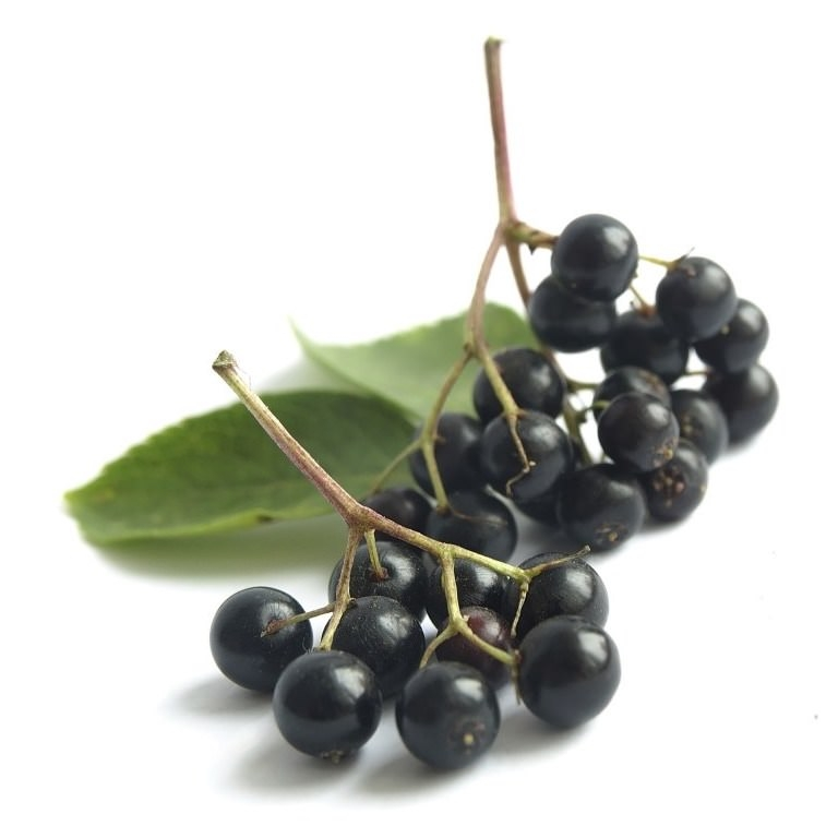 Elderberry Seed Oil | Organic Elderberry Oil - Nature In Bottle