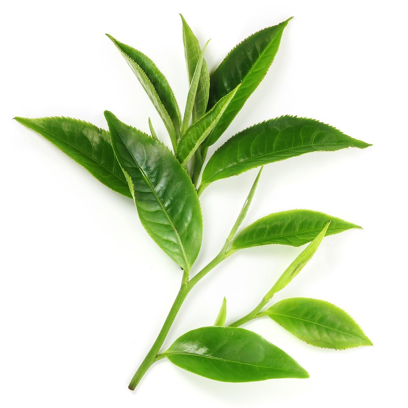 Green Tea Extract | Organic Camellia Sinensis Leaf Extract - Nature In Bottle