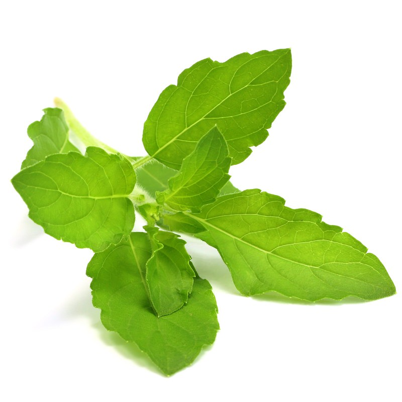 Tulsi Essential Oil | Organic Holy Basil Essential Oil - Nature In Bottle