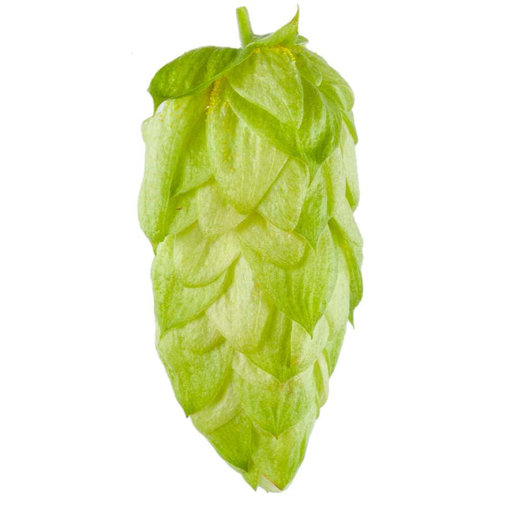 Hops Essential Oil | Organic Humulus Lupulus Oil - Nature In bottle