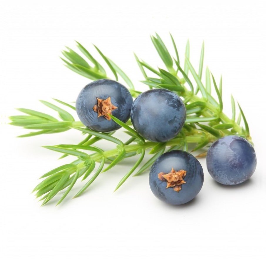 Juniper Berry Essential Oil | Organic Juniperus Communis Berry Essential Oil - Nature In Bottle