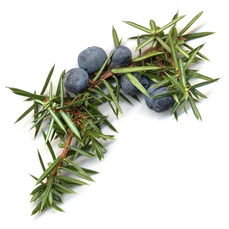Juniper Leaf Essential Oil | Organic Juniperus Communis Leaf Essential Oil - Nature In Bottle