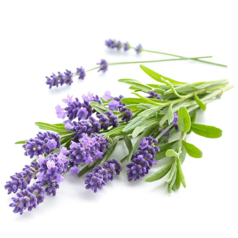 Lavender Absolute | Organic French Lavender Absolute - Nature In Bottle