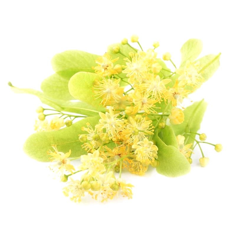 Linden Blossom Absolute | Organic Lime Blossom Essential Oil - Nature In Bottle