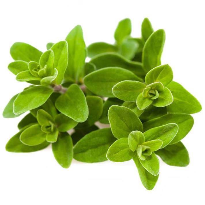 Marjoram Sweet Essential Oil | Organic Sweet Marjoram Essential Oil - Nature In Bottle