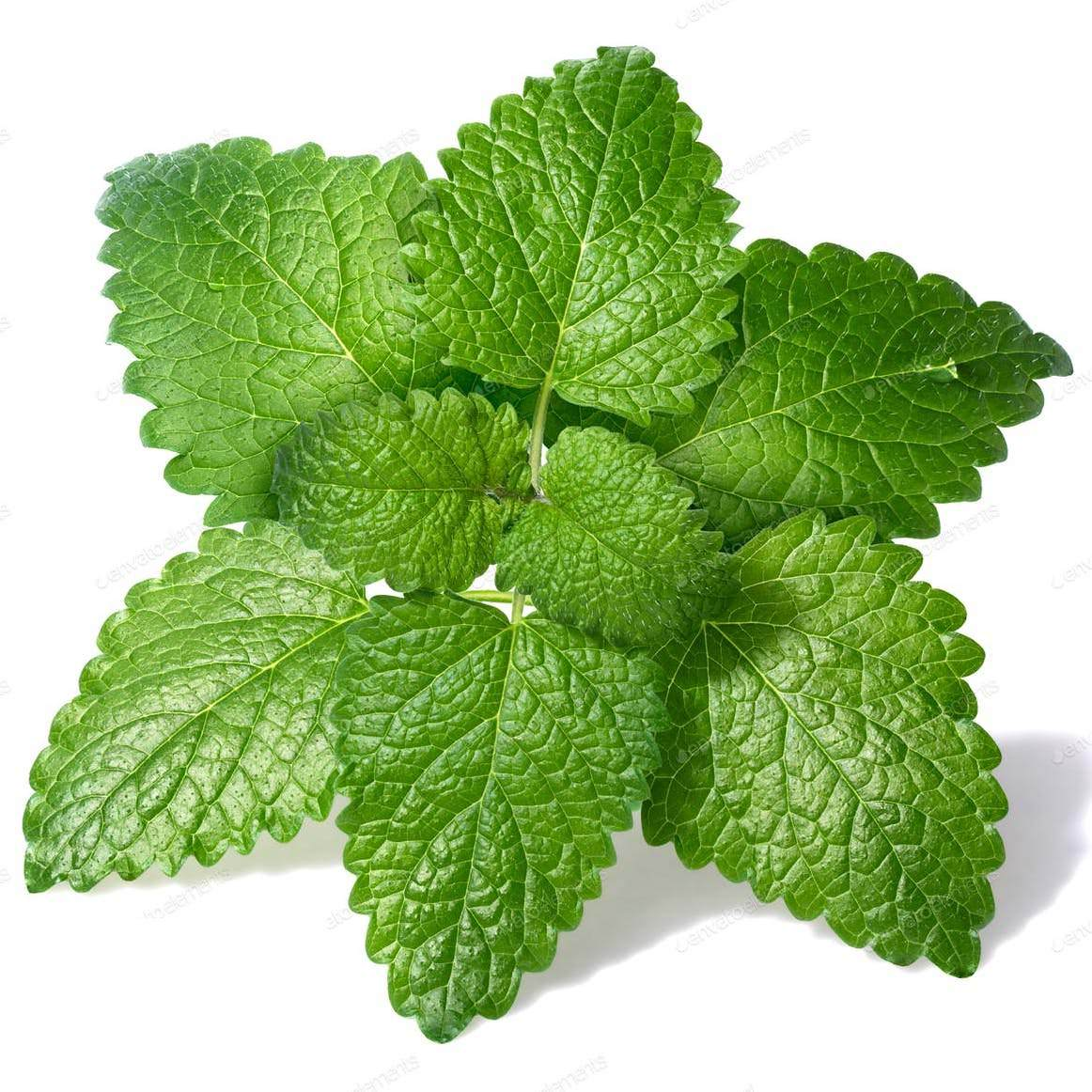 Melissa Essential Oil | Organic Lemon Balm Essential Oil - Nature ...