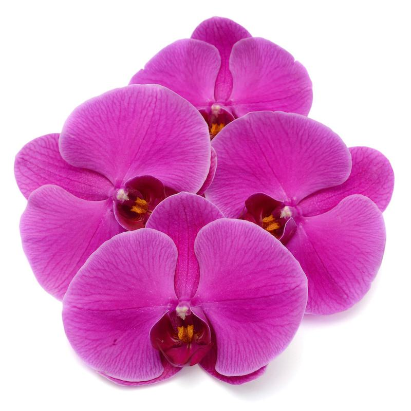 Orchid Oil   Organic Infused Orchid Oil - Nature In Bottle