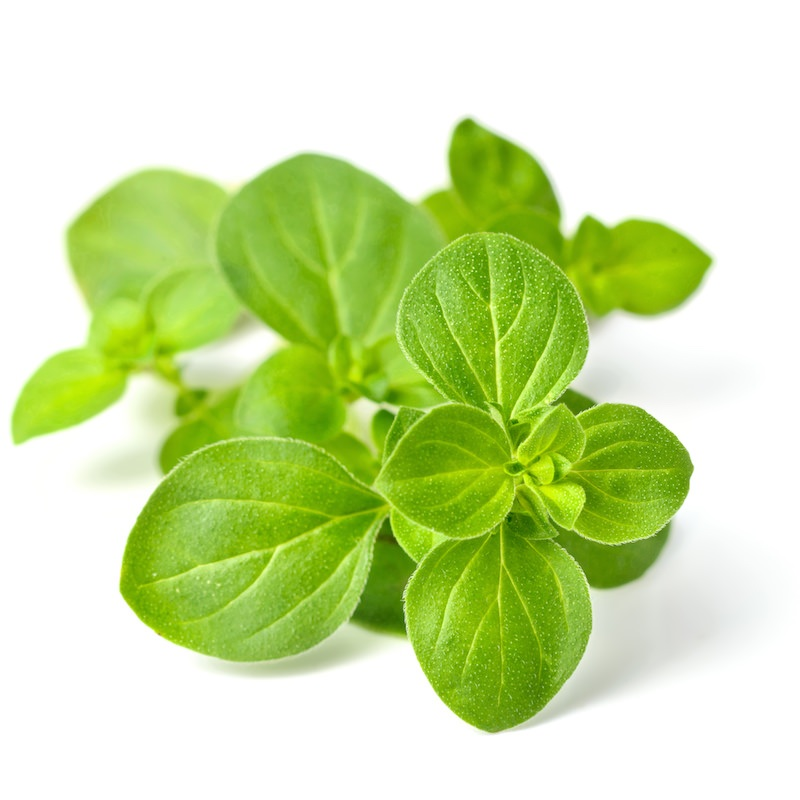 Oregano Essential Oil | Organic Origanum Vulgare Essential Oil - Nature In Bottle