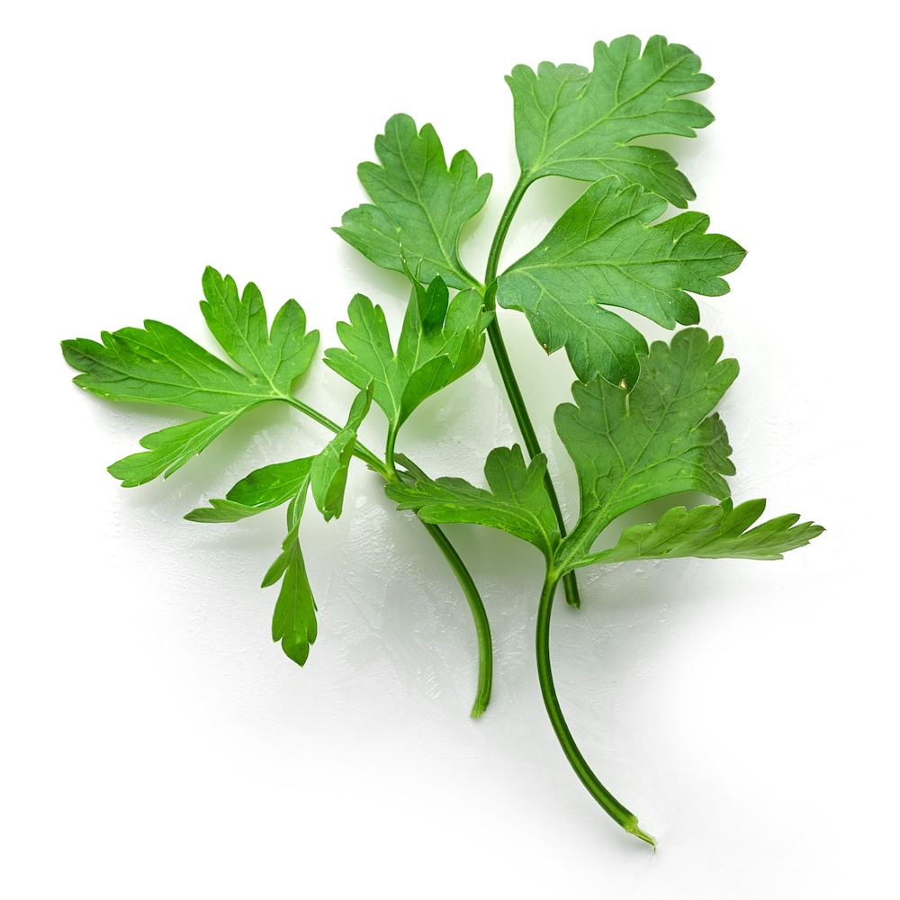 Parsley Seed Essential Oil | Organic Parsley Essential Oil - Nature In Bottle