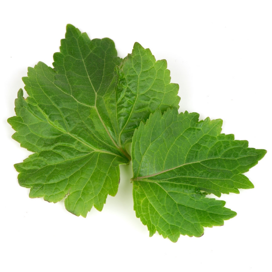 Patchouli Essential Oil | Organic Patchouly Leaf Essential Oil - Nature In Bottle