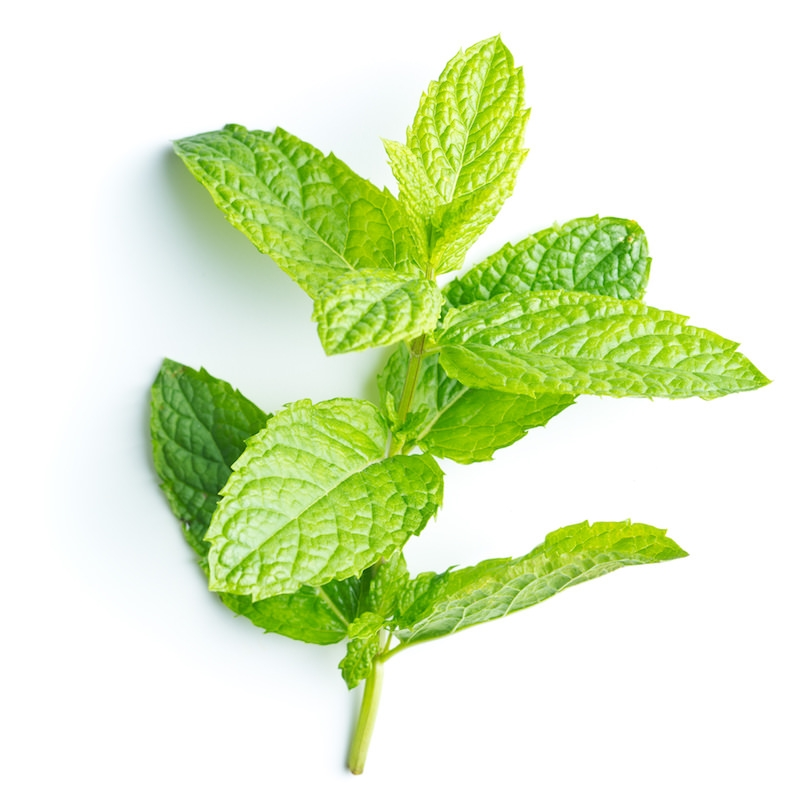 Peppermint Hydrosol | Organic Mentha Piperita Hydrosol - Nature in Bottle