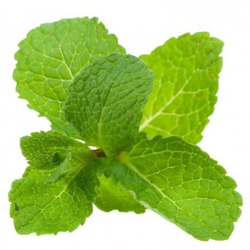 Spearmint Essential Oil | Mentha Spicata Leaf Essential Oil - Nature In Bottle