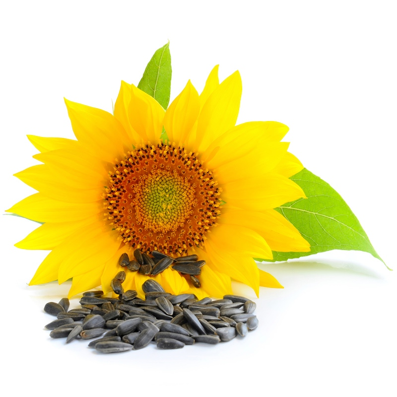 Sunflower Oil | Organic Sunflower Seed Oil (High Oleic) - Nature In Bottle