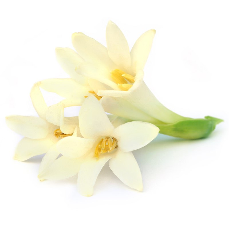 Tuberose Hydrosol | Organic Tuberose Hydrosol - Nature in Bottle