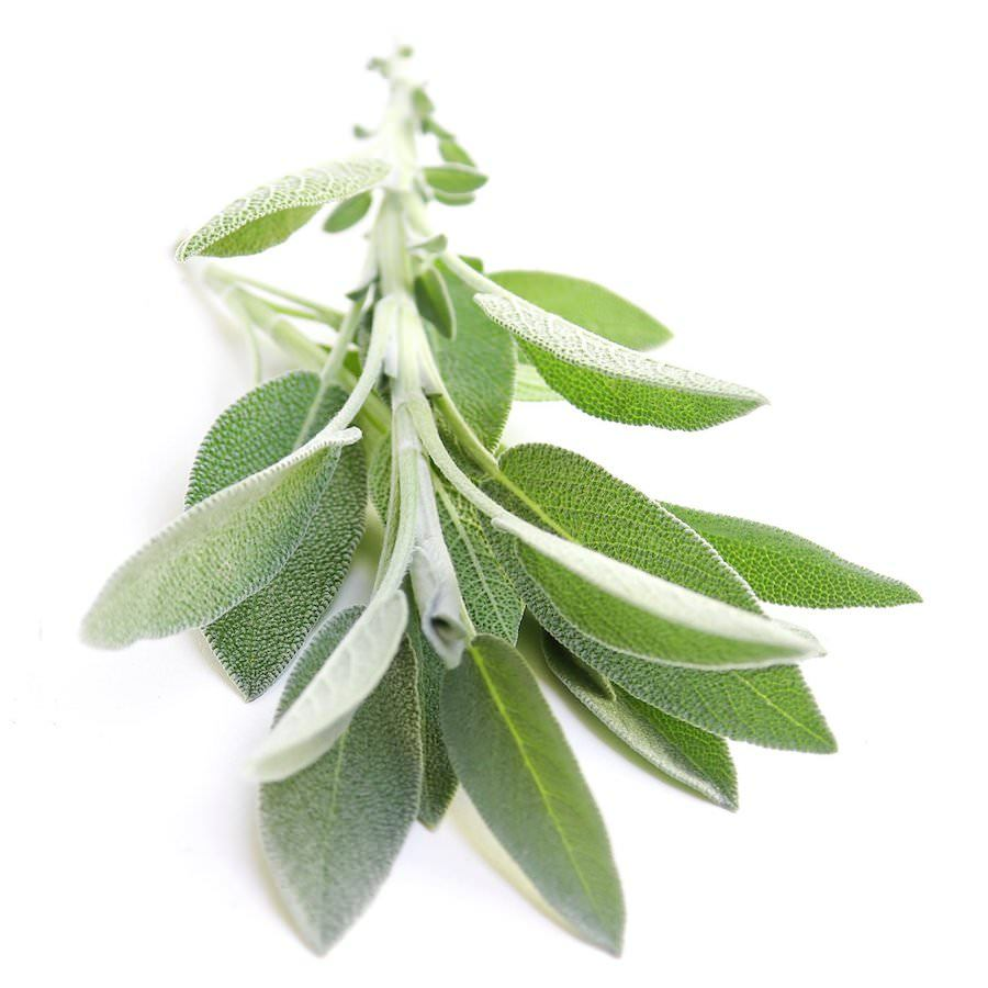 White Sage Essential Oil | Organic Salvia Apiana Essential Oil - Nature In Bottle