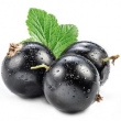 BLACKCURRANT SEED OIL