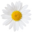 CHAMOMILE (GERMAN BLUE) HYDROSOL