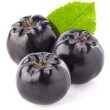 CHOKEBERRY (ARONIA) SEED OIL