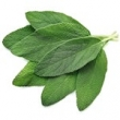 COMMON SAGE (DALMATIAN SAGE) OIL