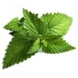 CORN MINT (WILD MINT) OIL