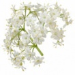 ELDERFLOWER HYDROSOL