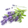 LAVENDER OIL 40/42 (STANDARDISED)