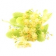 LINDEN BLOSSOM ABSOLUTE OIL