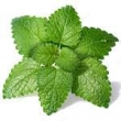 MELISSA (LEMON BALM) OIL