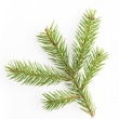 NORWAY SPRUCE OIL