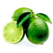 PERSIAN LIME (TAHITIAN LIME) OIL