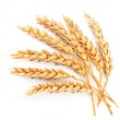 WHEAT GERM EXTRACT
